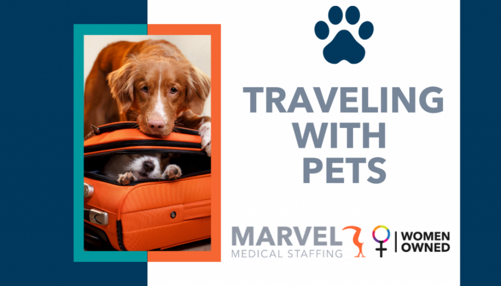Traveling with pets blog
